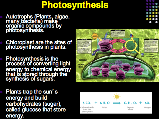 biology photosynthesis lab